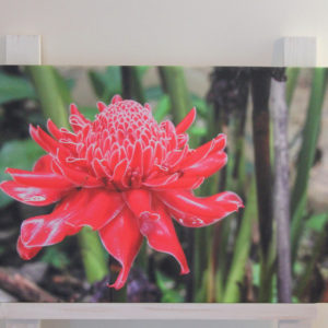 tropical flower canvas